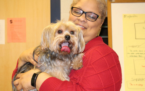 Canines Earn Top Pick as Teacher's Favorite Pet