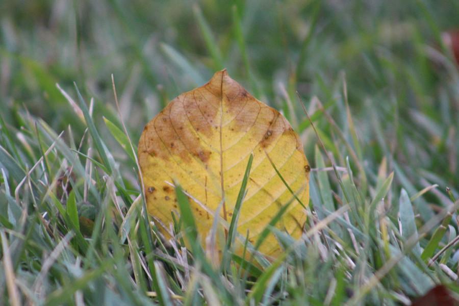 Signs of Fall at Southfield High